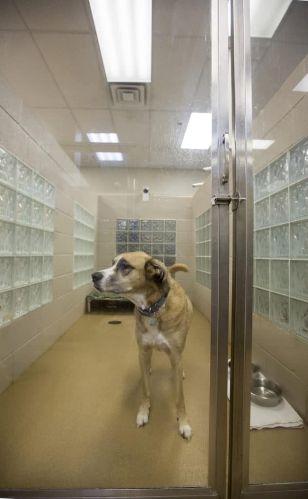 A Dog Standing in A Pet Room
