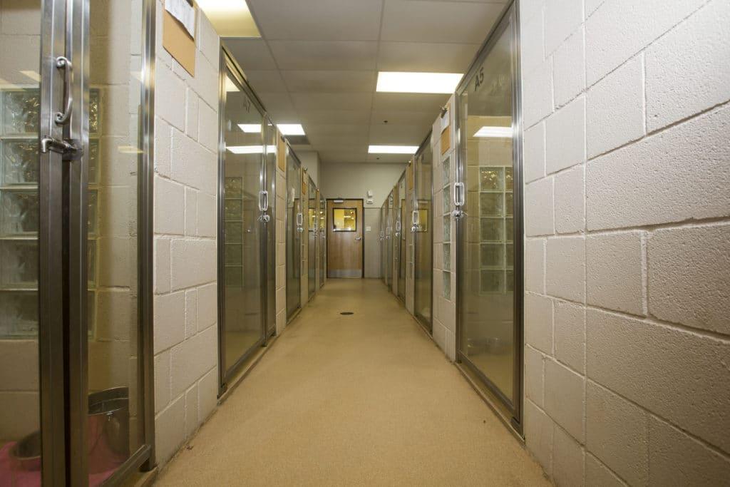 Hallway Along Pet Rooms