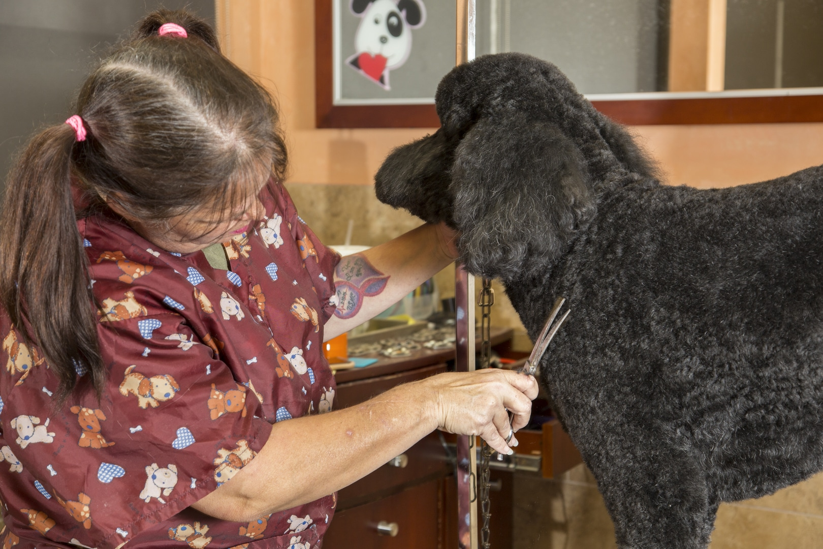 Grooming a Black Dog